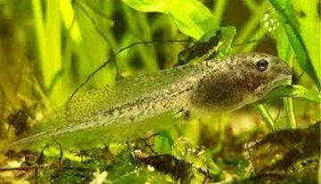 Light pollution may harm amphibians
