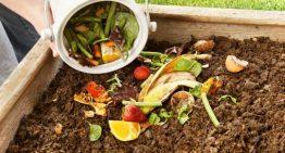 Waste food may help cut fossil fuel use – University of Waterloo
