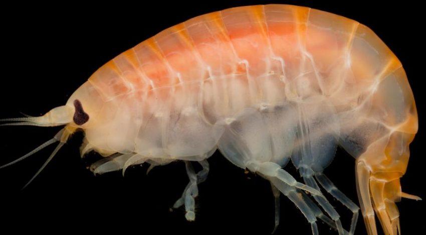 Larger marine invertebrates more vulnerable to ocean deoxygenation