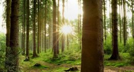 India unlikely to meet carbon sink commitment