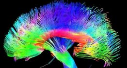 The brain's pathways to imagination may hold the key to altruistic behavior