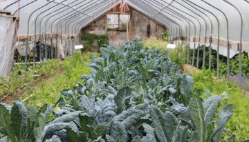 5 Indian Start-Ups that are Revolutionizing The Concept Of Urban Farming